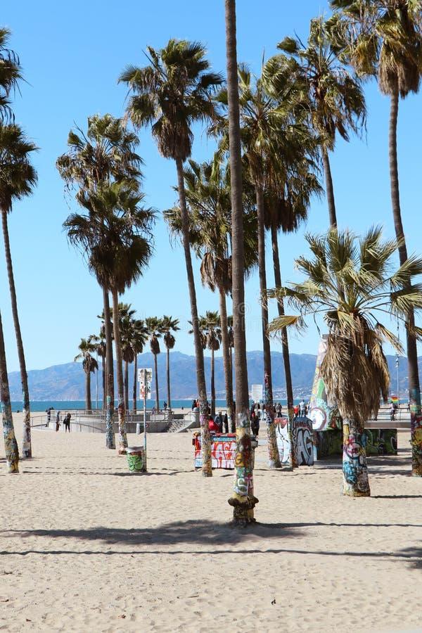 威尼斯海滩棕榈树 免版税图库摄影