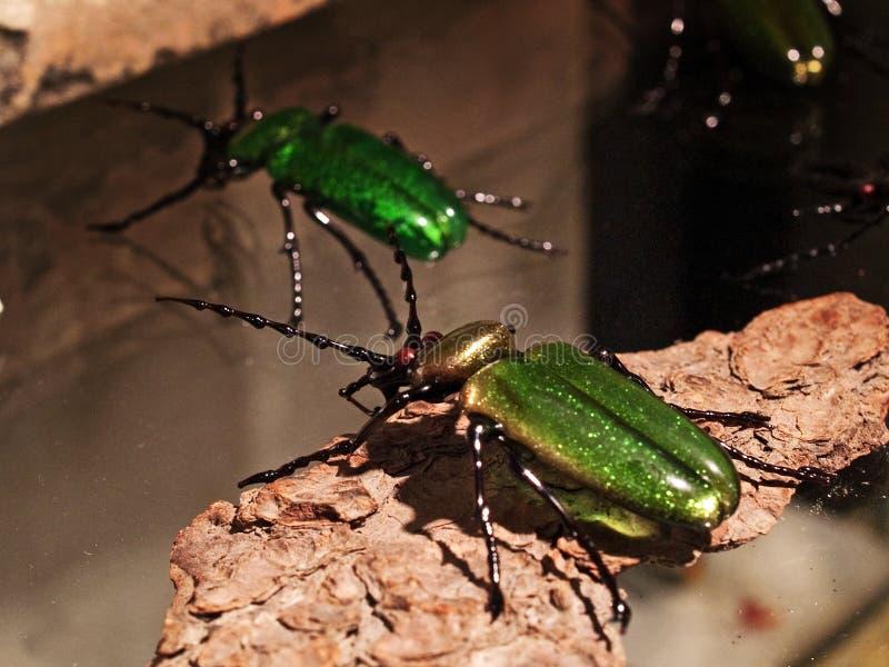 威尼斯-玻璃昆虫 免版税库存照片