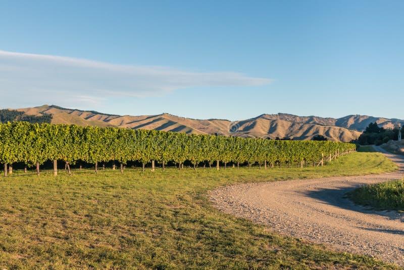 威瑟小山葡萄园在Marlborough地区,新西兰 免版税库存图片