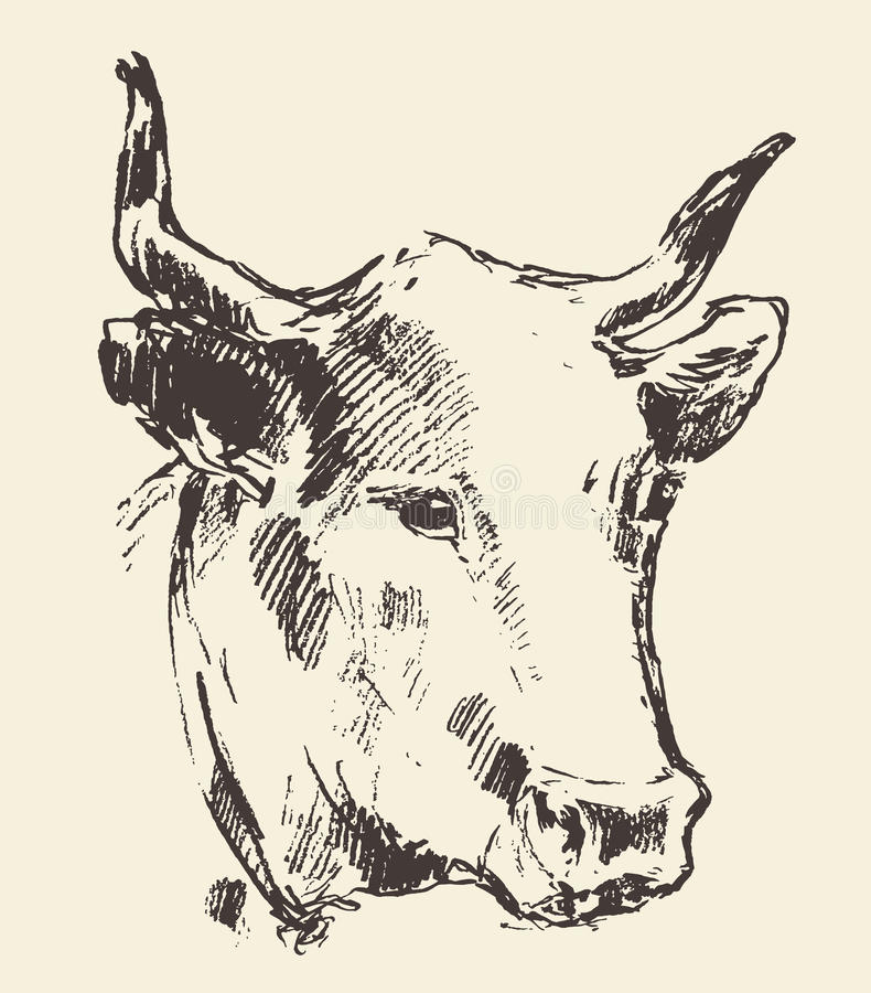威胁有响铃荷兰牛品种被画的剪影的头 库存例证