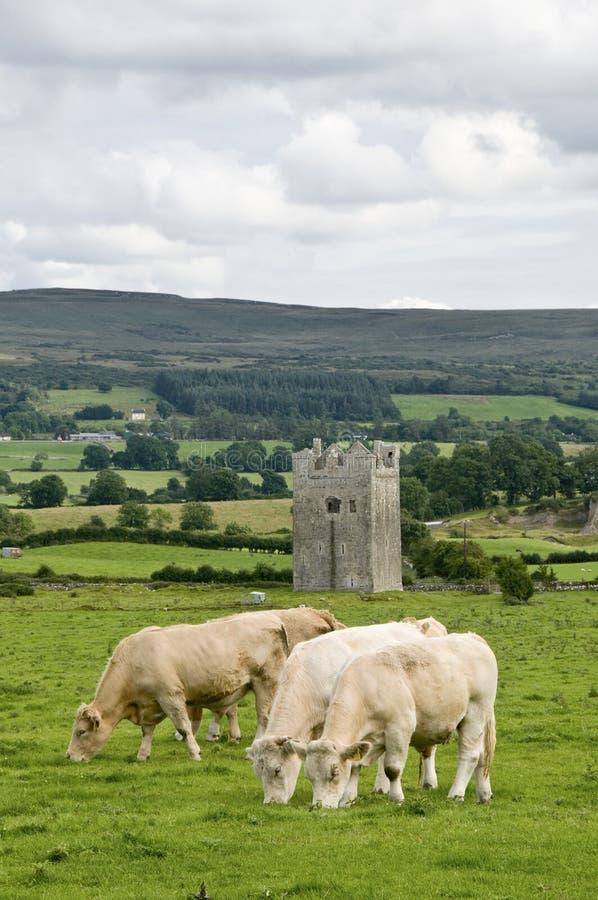 威胁爱尔兰塔 免版税库存照片