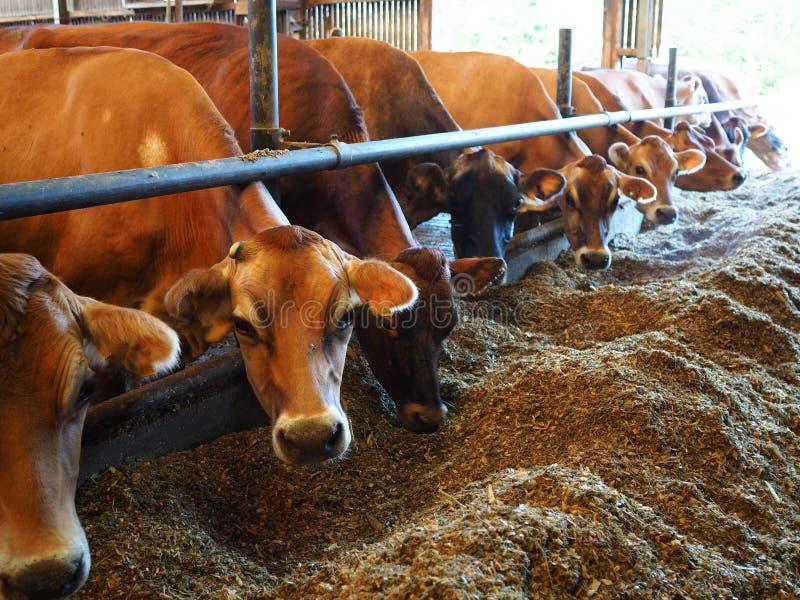 威胁现代牛棚的农场 库存照片