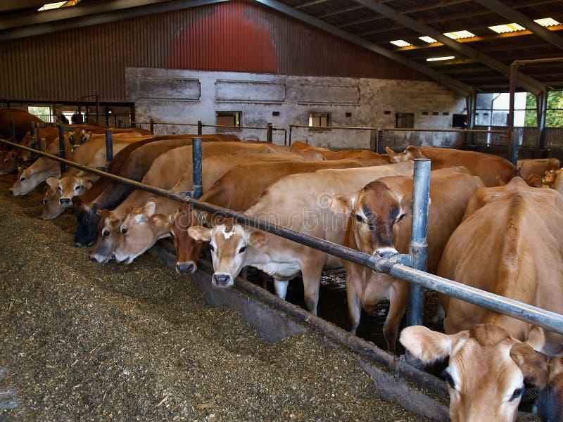威胁现代牛棚的农场 库存图片