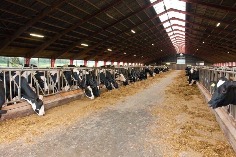 威胁现代牛棚的农场 免版税库存照片