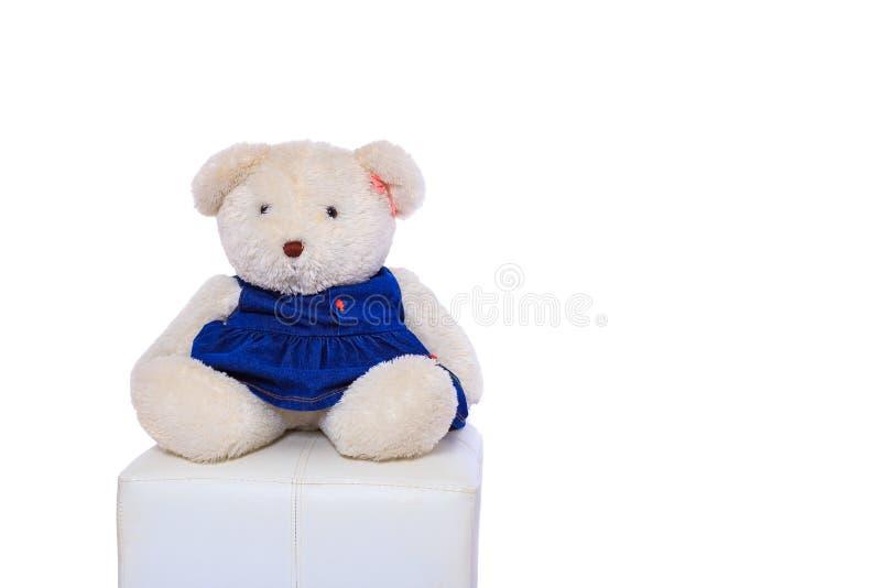 娃娃熊和白色背景 免版税图库摄影