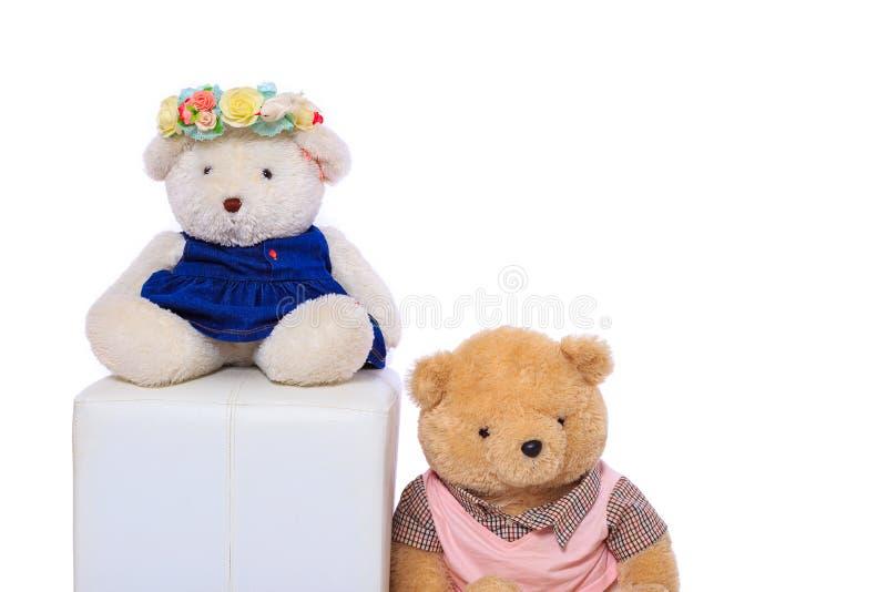 娃娃熊和白色背景 库存照片