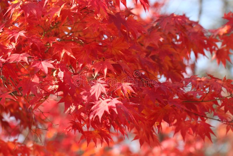 娜米海岛秋天叶子2 图库摄影