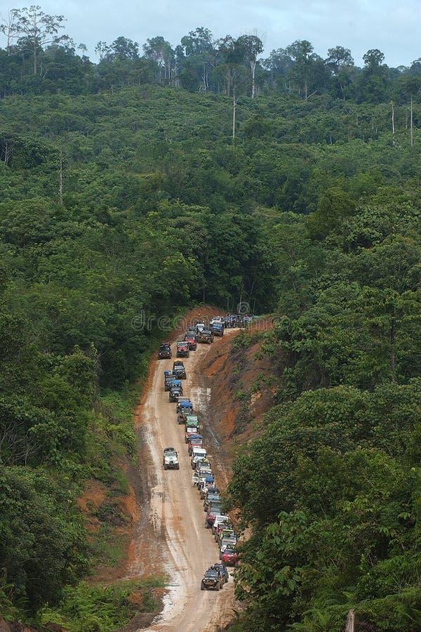婆罗洲森林 免版税库存照片