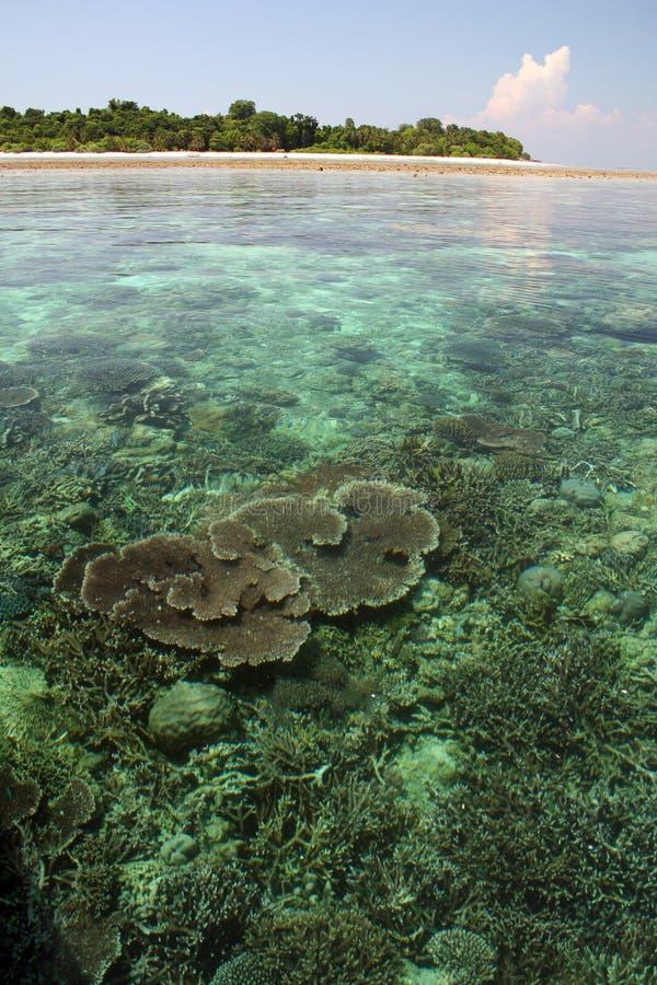 婆罗洲sipadan珊瑚岛的礁石 库存照片