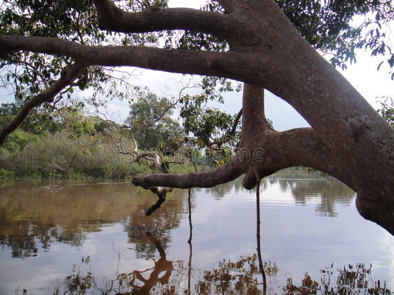 婆罗洲河 库存图片