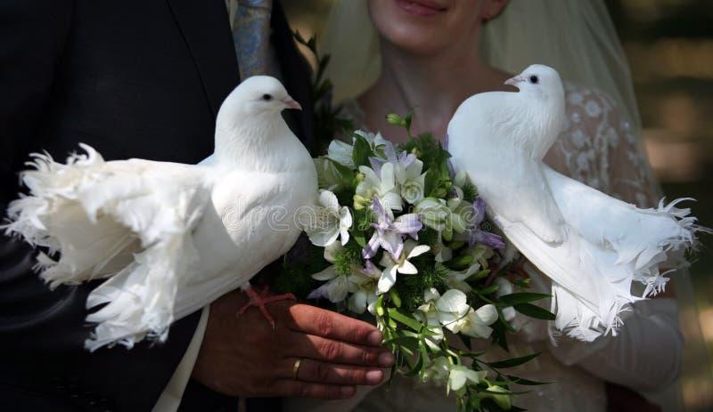 婚姻的鸽子 库存图片