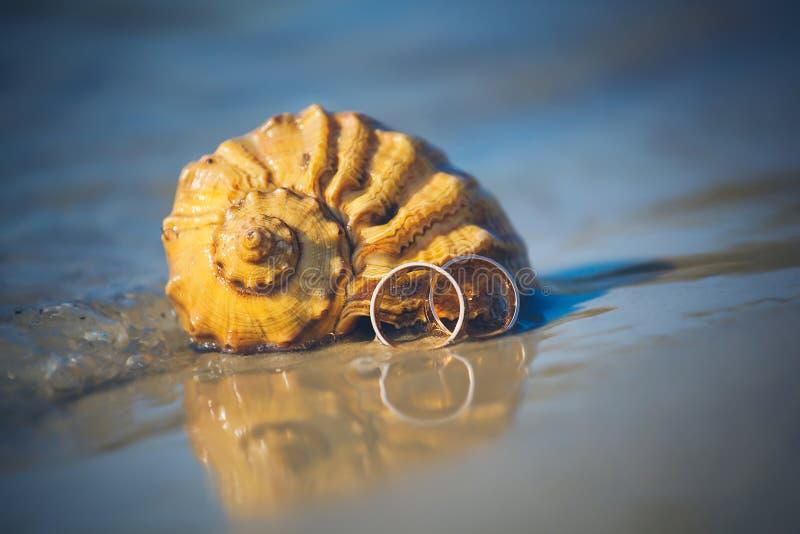婚戒在海滩的壳说谎 库存照片