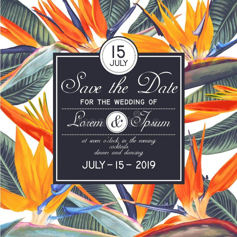 婚礼或党与热带花的邀请模板-鹤望兰,南非植物,叫起重机parad花或鸟  向量例证
