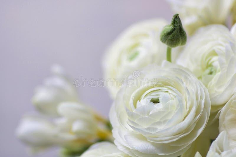 婚礼花束的细节与白色毛茛和fresia的 库存图片