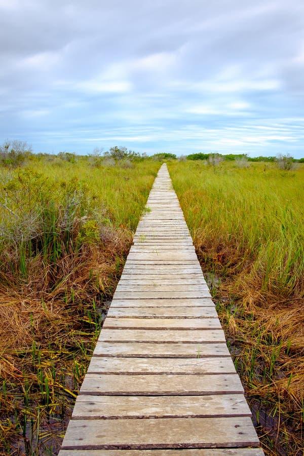 贪婪草盖的沼泽的木木板走道 库存图片