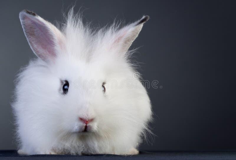 婴孩兔宝宝白色 免版税库存照片