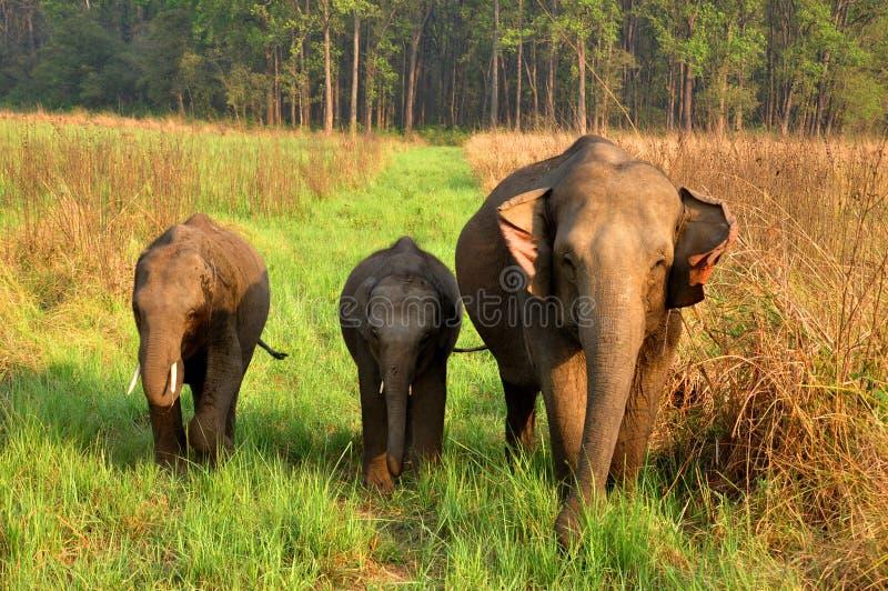 婴孩关心下大象母亲 免版税库存图片