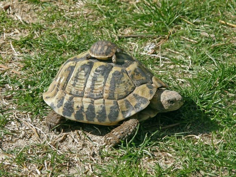 婴孩她的乌龟 库存照片