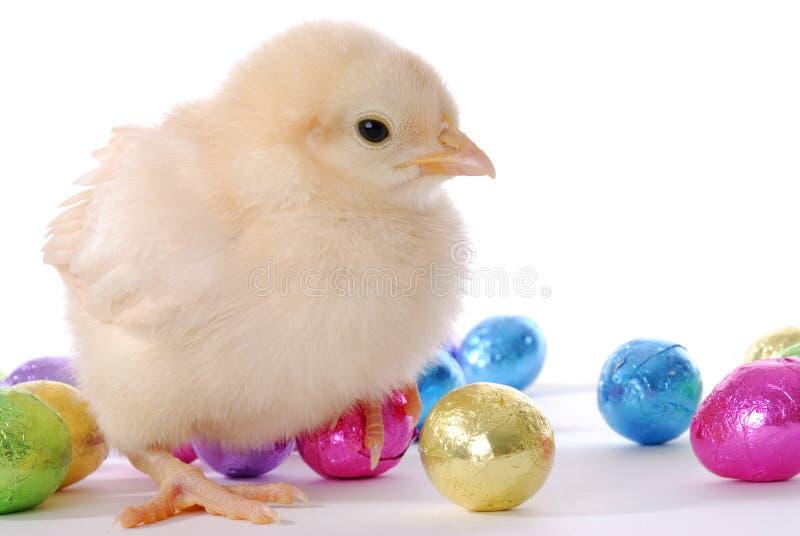 婴孩小鸡鸡蛋 免版税库存照片