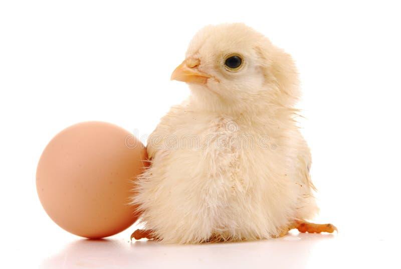 婴孩小鸡鸡蛋 库存照片