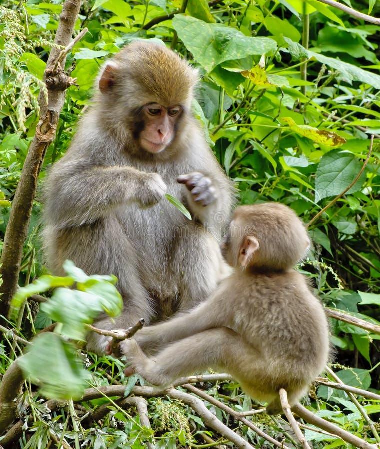 婴孩日本短尾猿母亲 免版税库存照片