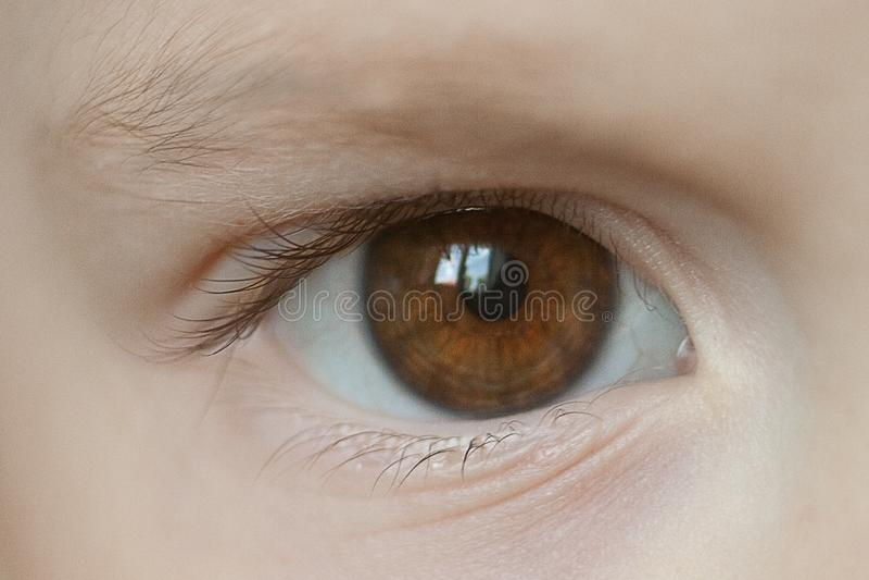 婴孩的棕色眼睛特写镜头  免版税库存照片