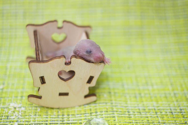 婴孩睡眠的概念 鼠崽在轻便小床睡觉 库存图片