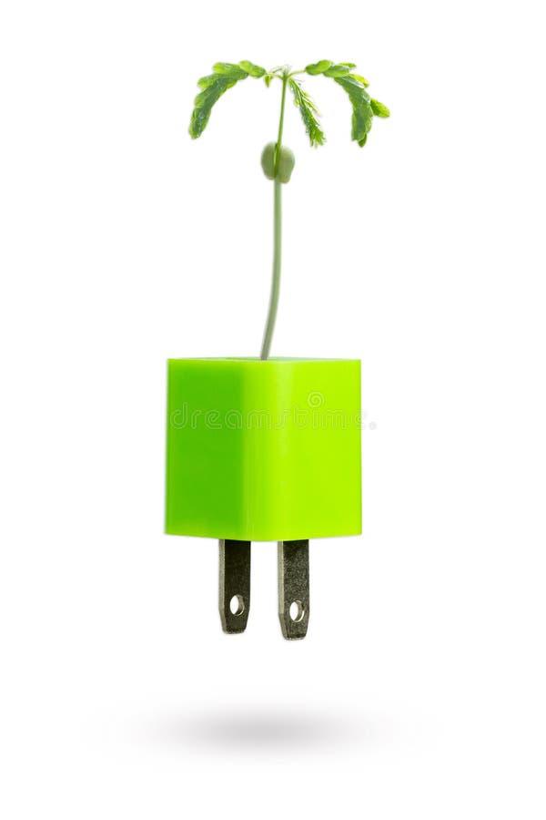 婴孩罗望子树增长在白色背景的绿色usb力量适配器充电器外面 库存图片