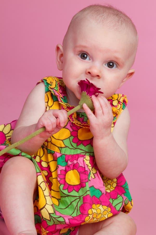 婴孩花 图库摄影