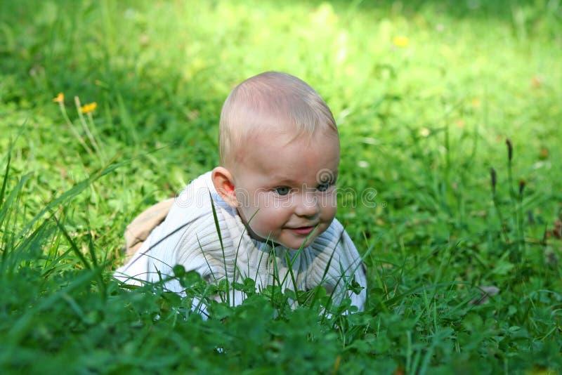 婴孩草 库存照片