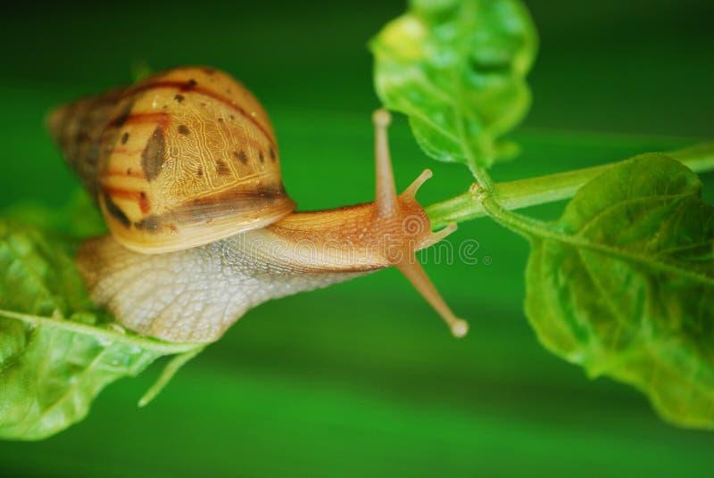 Download 婴孩蜗牛 库存图片. 图片 包括有 绿色, 晴朗, 蜗牛, 庭院, browne, 颜色, 结构树, 婴孩 - 22354793