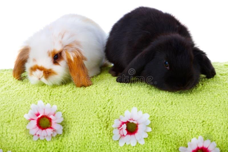 婴孩逗人喜爱的兔子 免版税库存图片