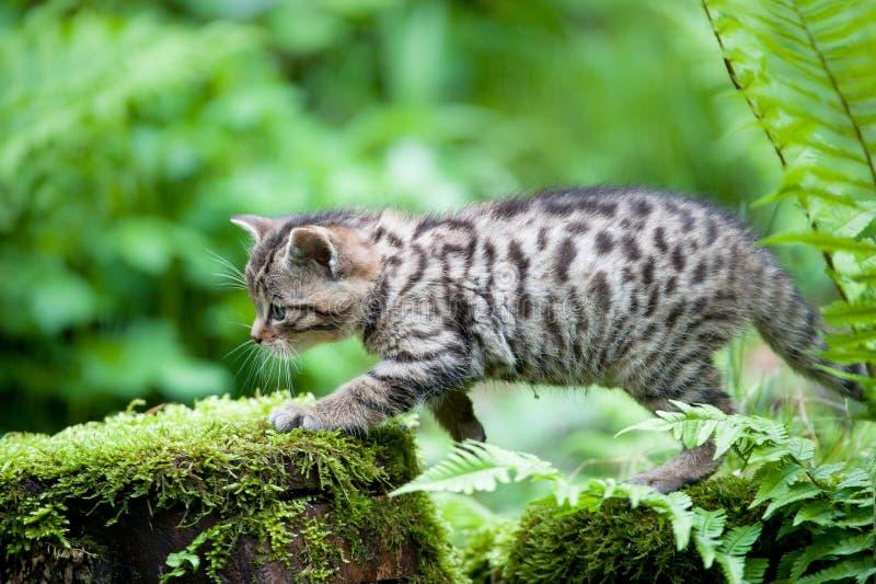 婴孩逗人喜爱的野猫 库存图片