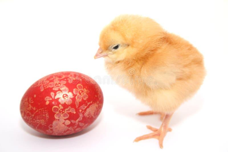 婴孩鸡复活节彩蛋 免版税库存照片