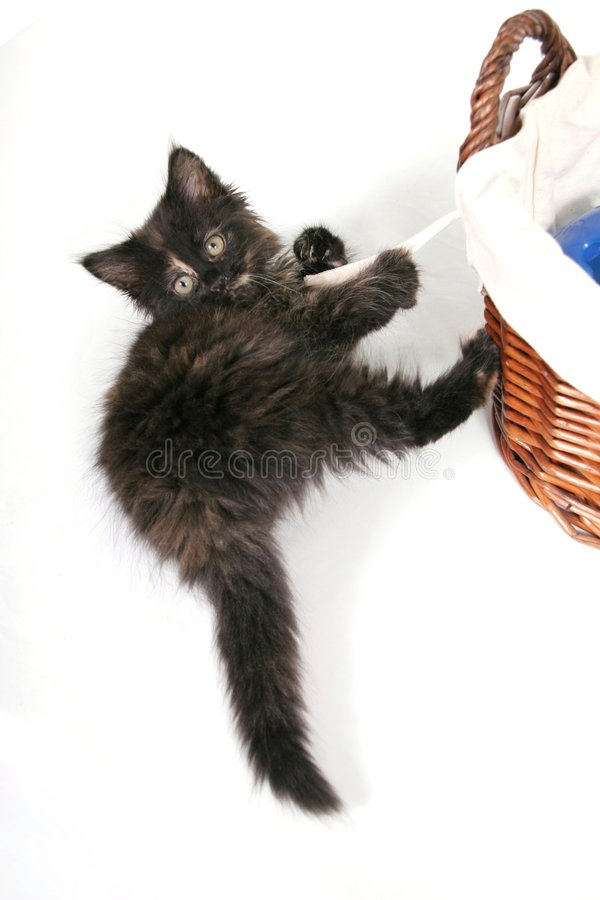 婴孩黑色小猫 免版税库存图片