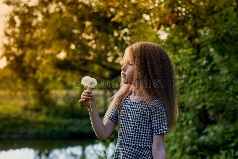 婴孩4年,与蓝眼睛,小卷毛 童年和冒险的美妙的时光 温暖的阳光 举行a 免版税库存图片