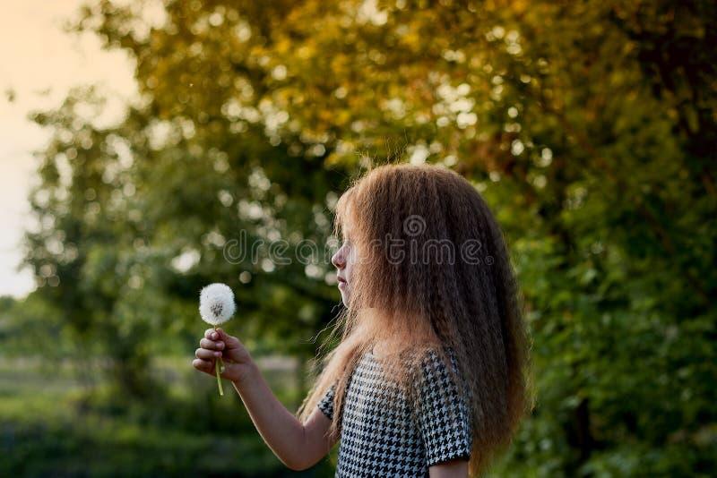 婴孩4年,与蓝眼睛,小卷毛 童年和冒险的美妙的时光 温暖的阳光 举行a 免版税图库摄影
