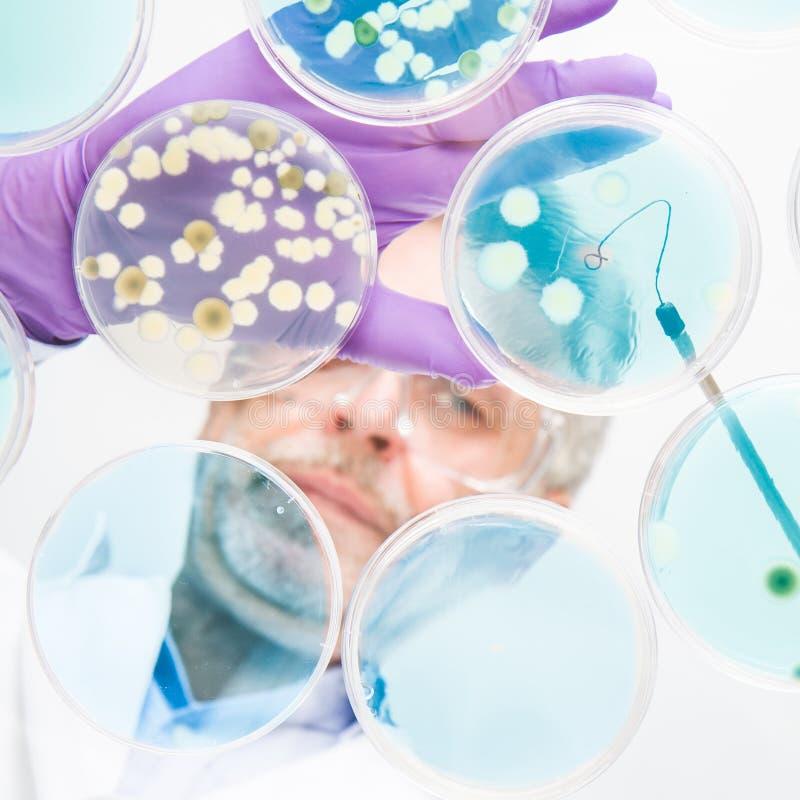 嫁接细菌的资深生命科学研究员。 库存照片
