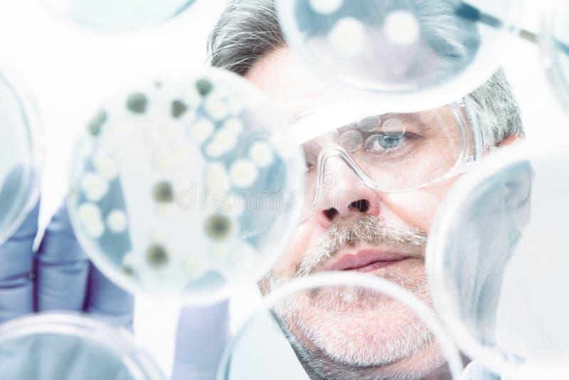 嫁接细菌的资深生命科学研究员 免版税库存照片