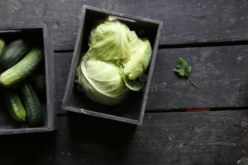嫩卷心菜、黄瓜和绿色叶子,健康吃想法 免版税库存照片