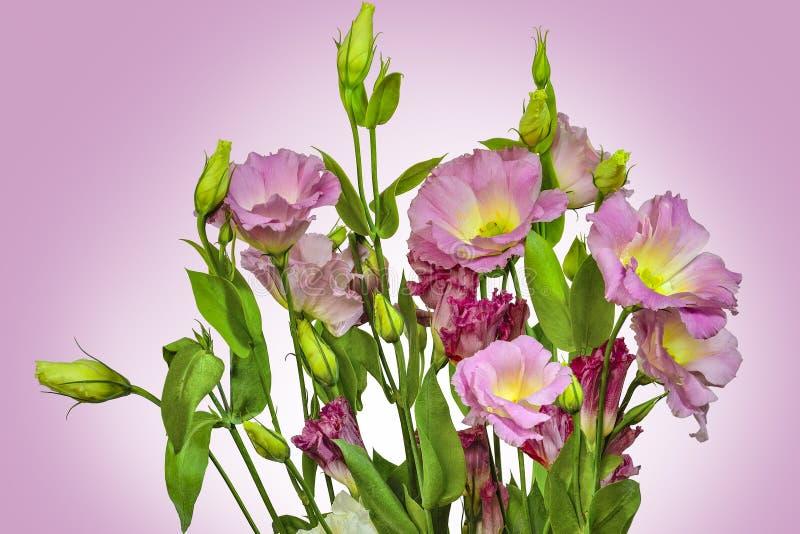 嫩桃红色花束与黄色南北美洲香草Lisianthus的开花 库存照片