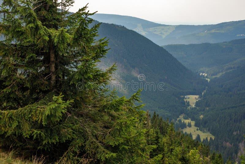 嫩绿的倾斜的看法和小山和谷 山风景在一个夏日 在山的夏天 美好的全景 免版税库存图片