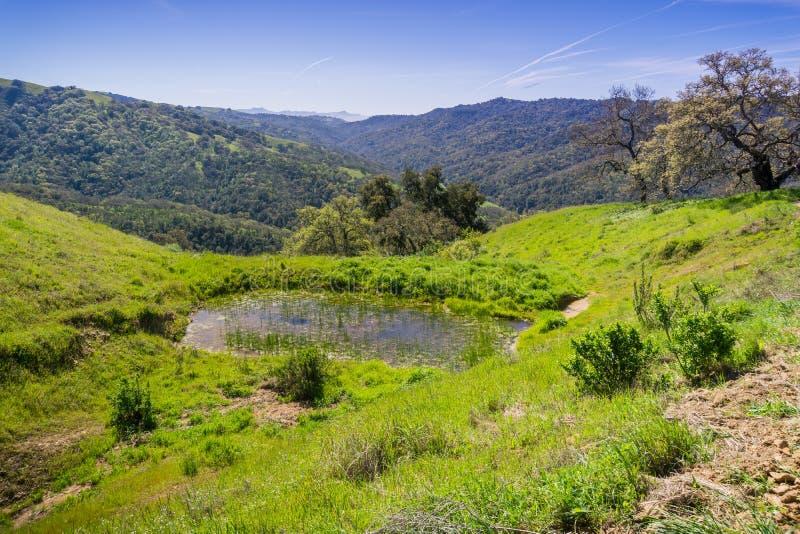 嫩绿的小山和谷在亨利柯伊国家公园,加利福尼亚 免版税库存图片