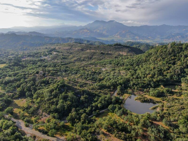 嫩绿的小山的鸟瞰图与树的在纳帕谷 库存照片