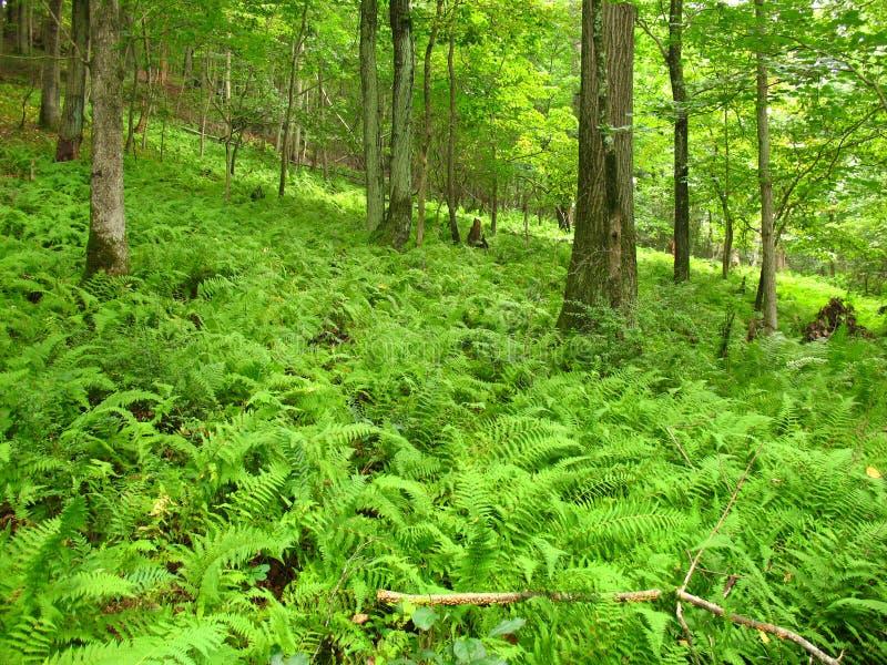 嫩绿的森林 图库摄影
