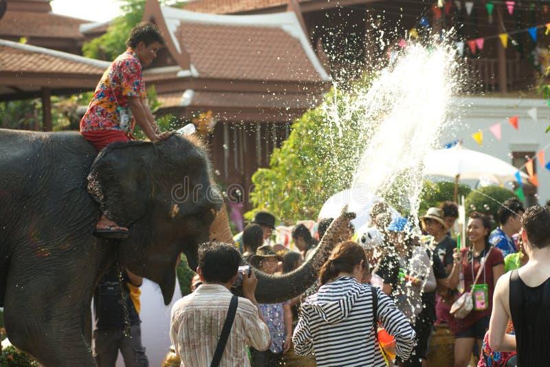 嬉戏地飞溅水乐趣和幸福在Songkran节日的大象 免版税库存照片