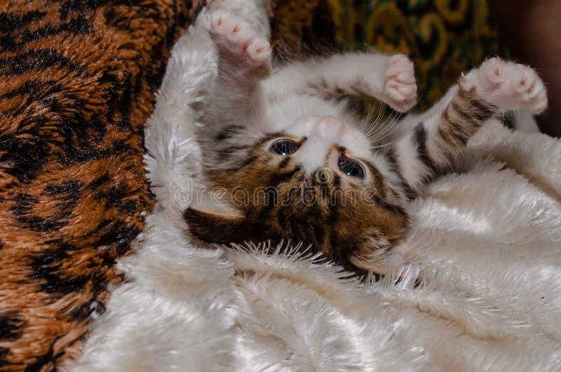嬉戏的小猫在床罩说谎和被使用 免版税库存图片