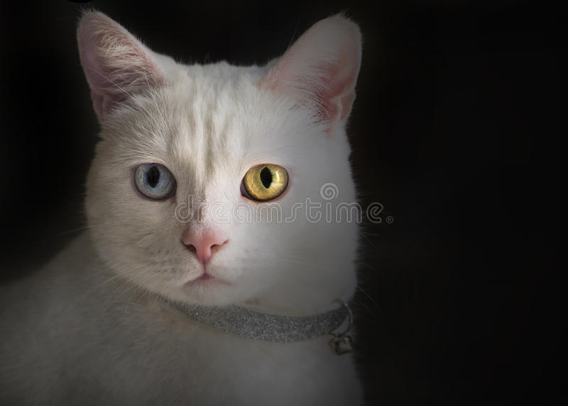 嬉戏的猫 免版税图库摄影