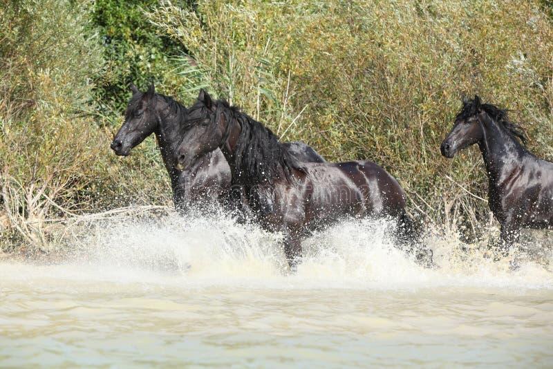 小组黑白花的母马在水中 免版税库存照片