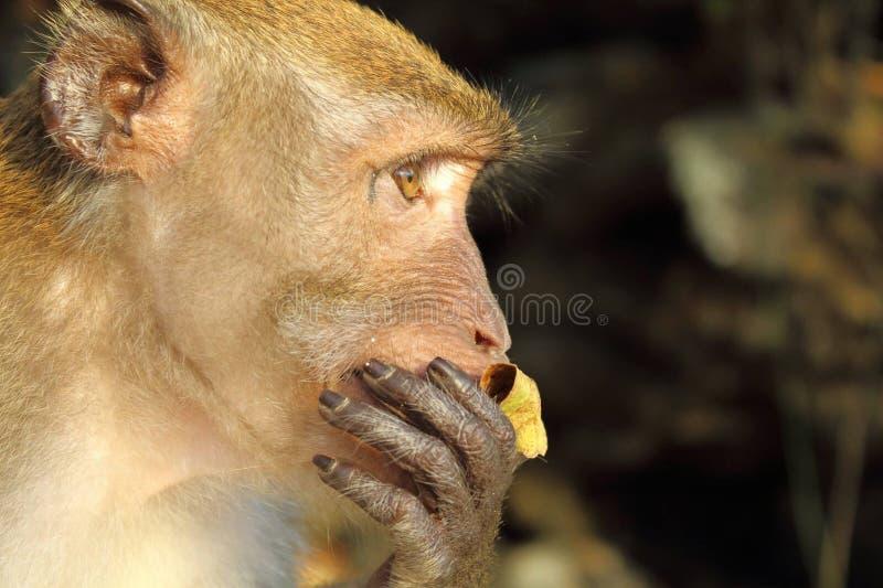 猴子冲击了 免版税图库摄影